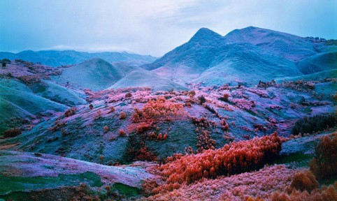 At Home he is a Tourist, Richard Mosse, 2012, Courtesy of The Vinyl Factory