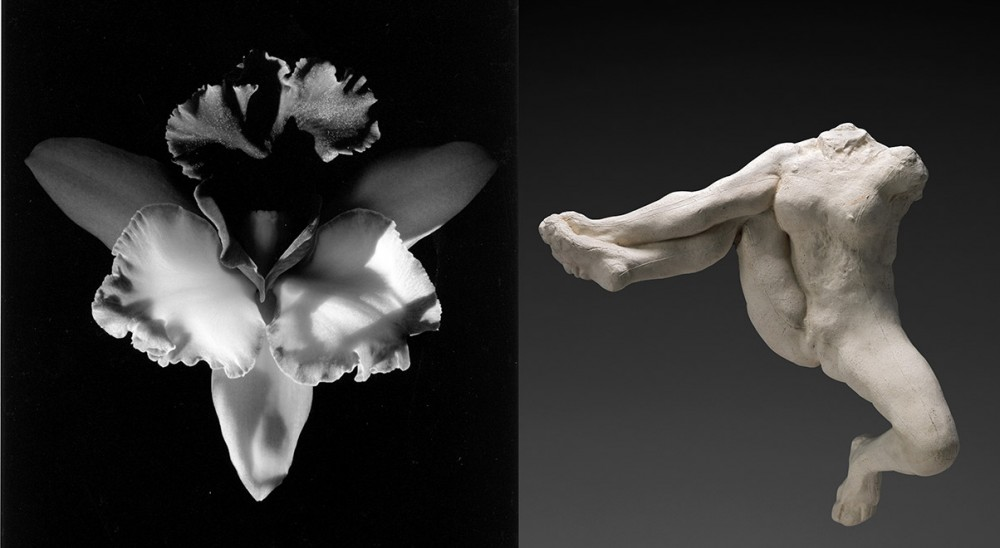 Robert Mapplethorpe, 'Orchid', 1985, © 2014 Robert Mapplethorpe Foundation, Inc. /  Auguste Rodin, 'Iris messagère des dieux', vers 1891-1893 © Paris, musée Rodin, ph. C. Baraja