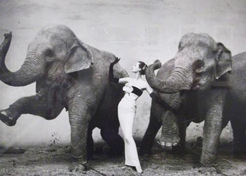 Dovima with Elephants (1955) Photography by Richard Avedon