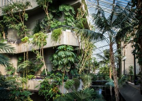 14. Conservatory, Barbican Centre, CREDIT Max Colson