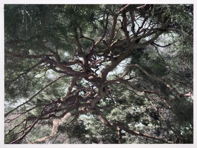 HERO_AMONG_THE_TREES_HAYWARD_3